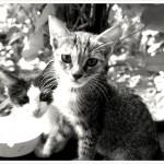 Hostel kitten