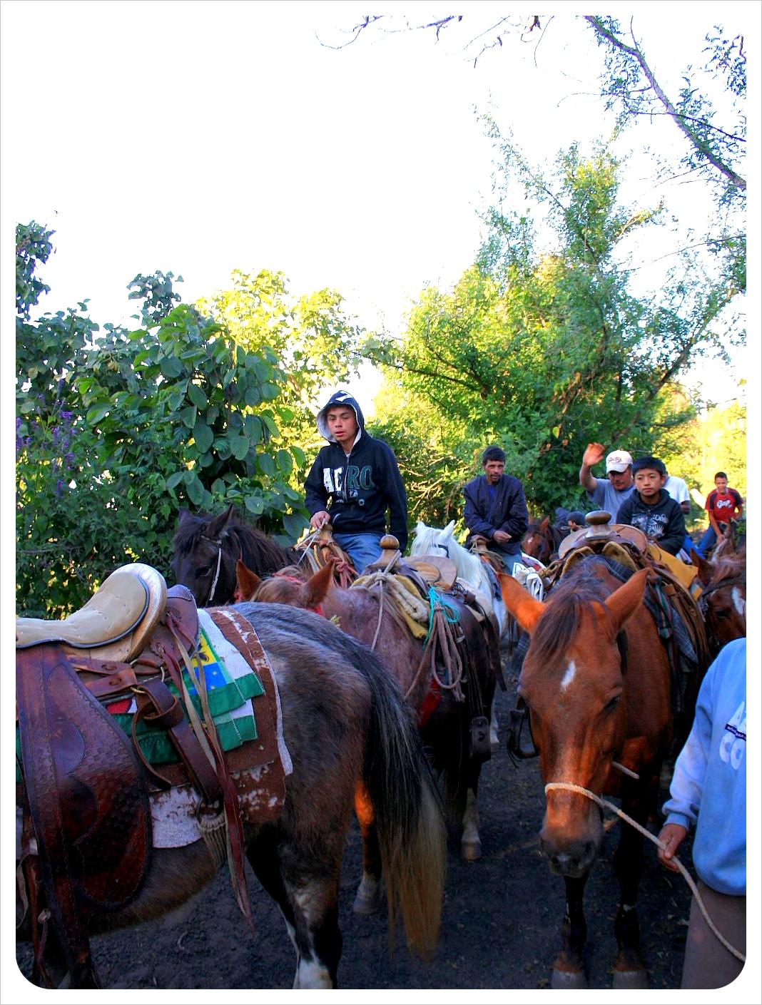 Pacaya horses