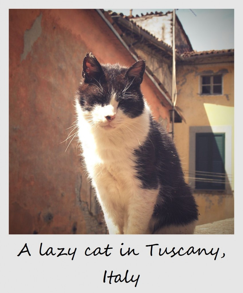 polaroid of the week italy cat in tuscany