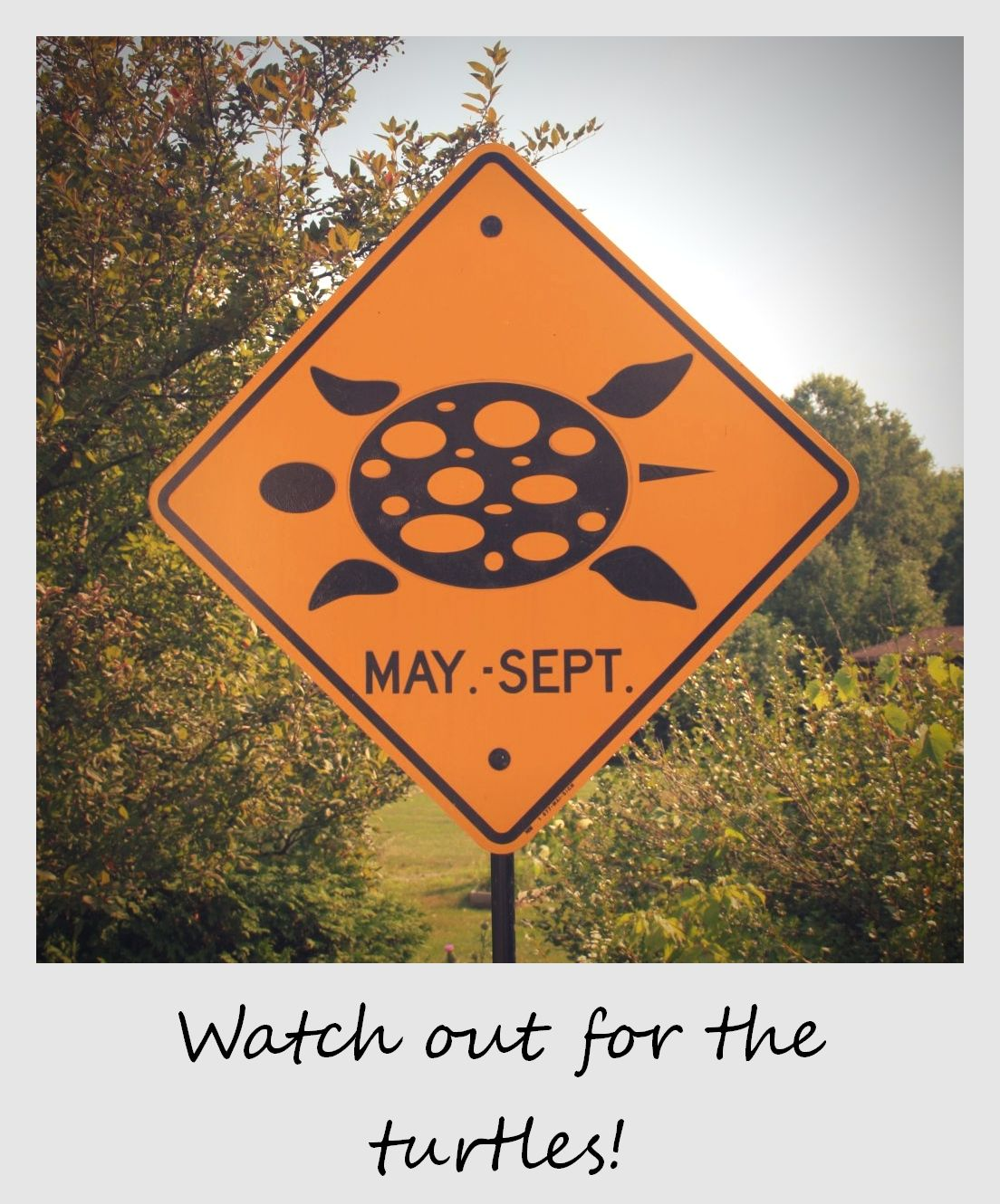polaroid of the week canada ontario turtle sign