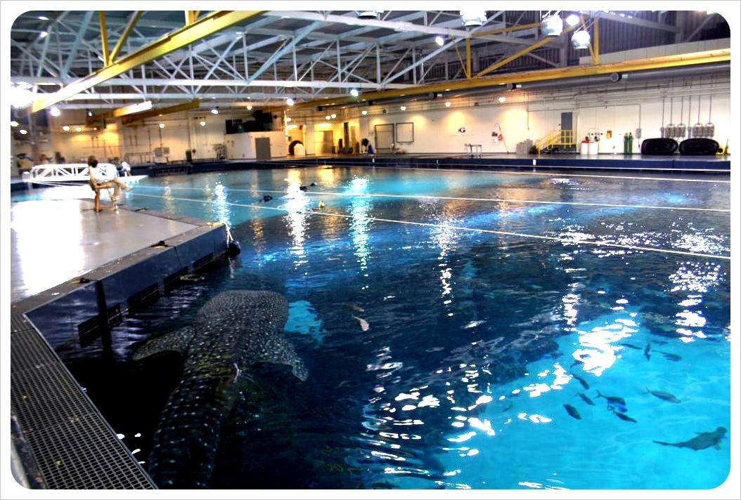 Atlanta Aquarium behind the scenes with whale shark