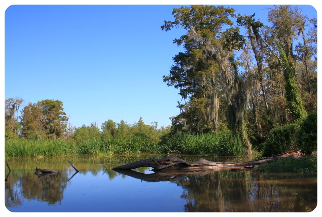 Swamps Louisiana honey island