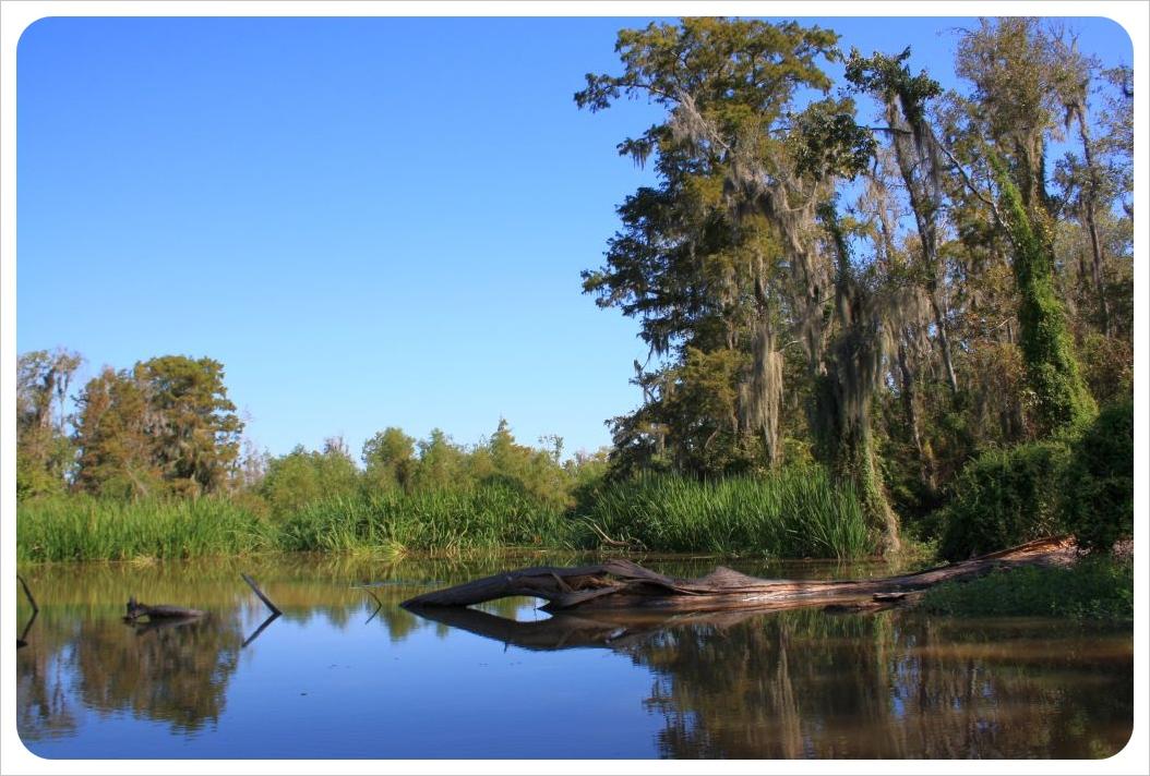 Swamps Louisiana honey island