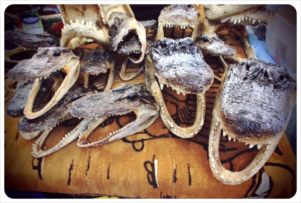 french market alligators