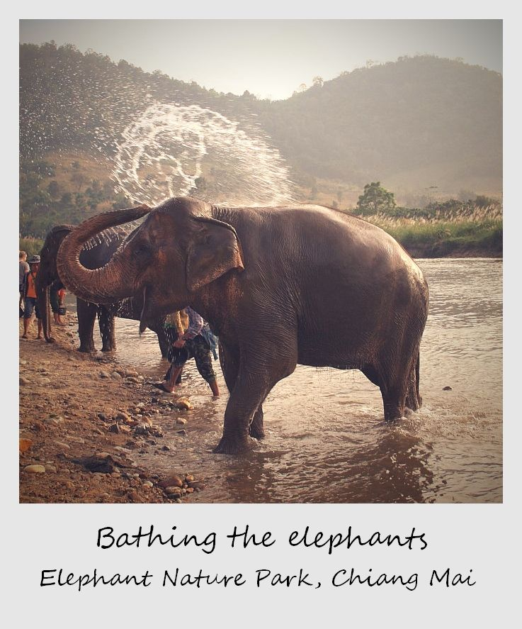 polaroid of the week thailand chiang mai elephant shower