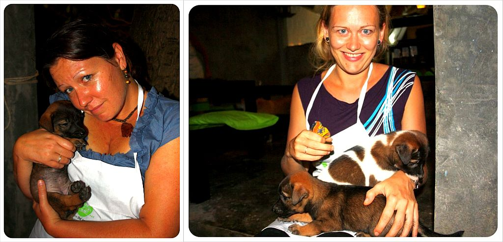 puppies at time for lime on koh lanta