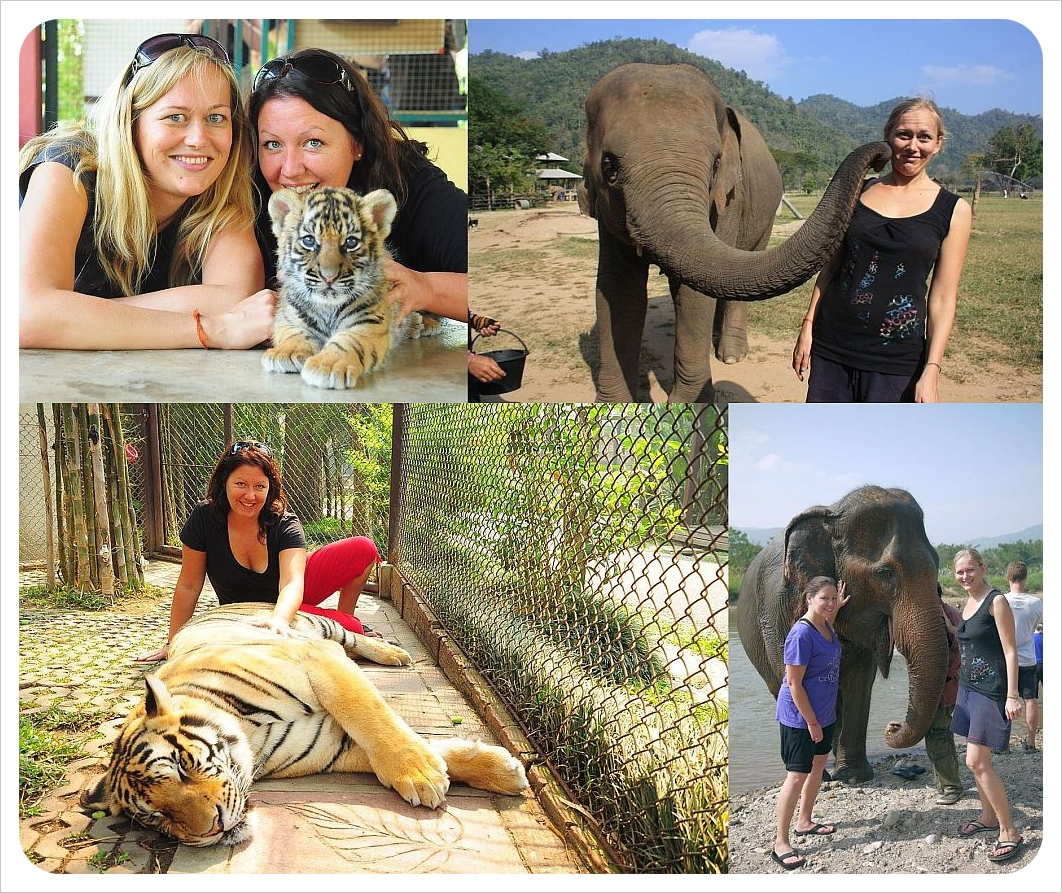 dani & jess with elephants and tigers in thailand