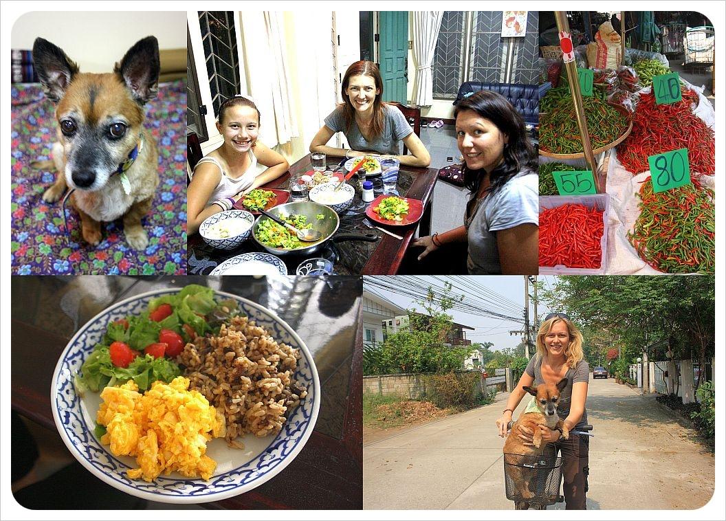 housesitting in chiang mai thailand