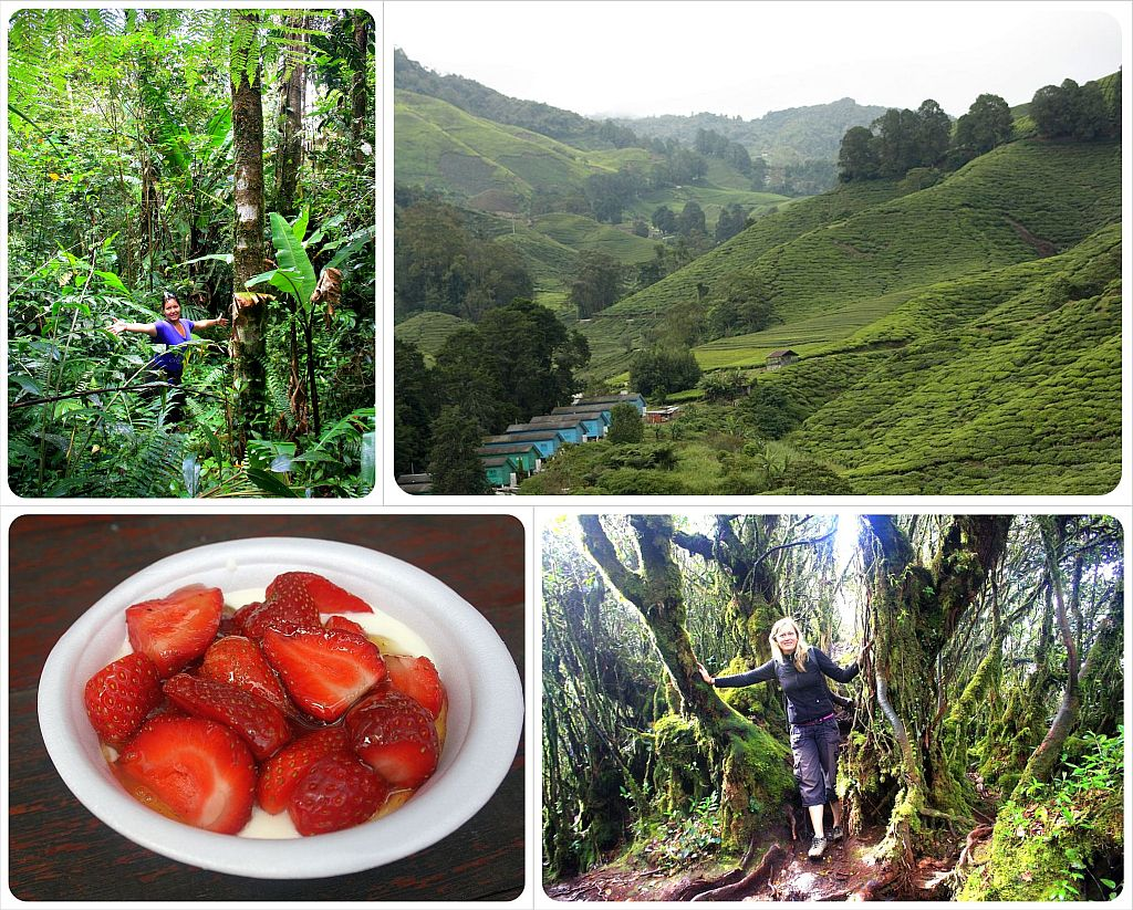 hiking in the cameron highlands malaysia