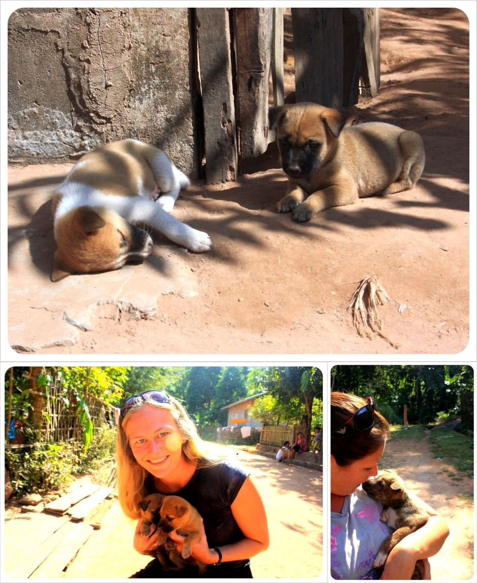 playing with puppies in muang ngoi neua