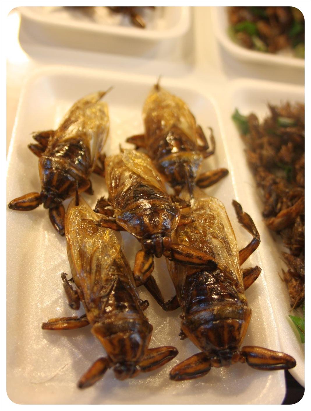 chiang rai fired crickets