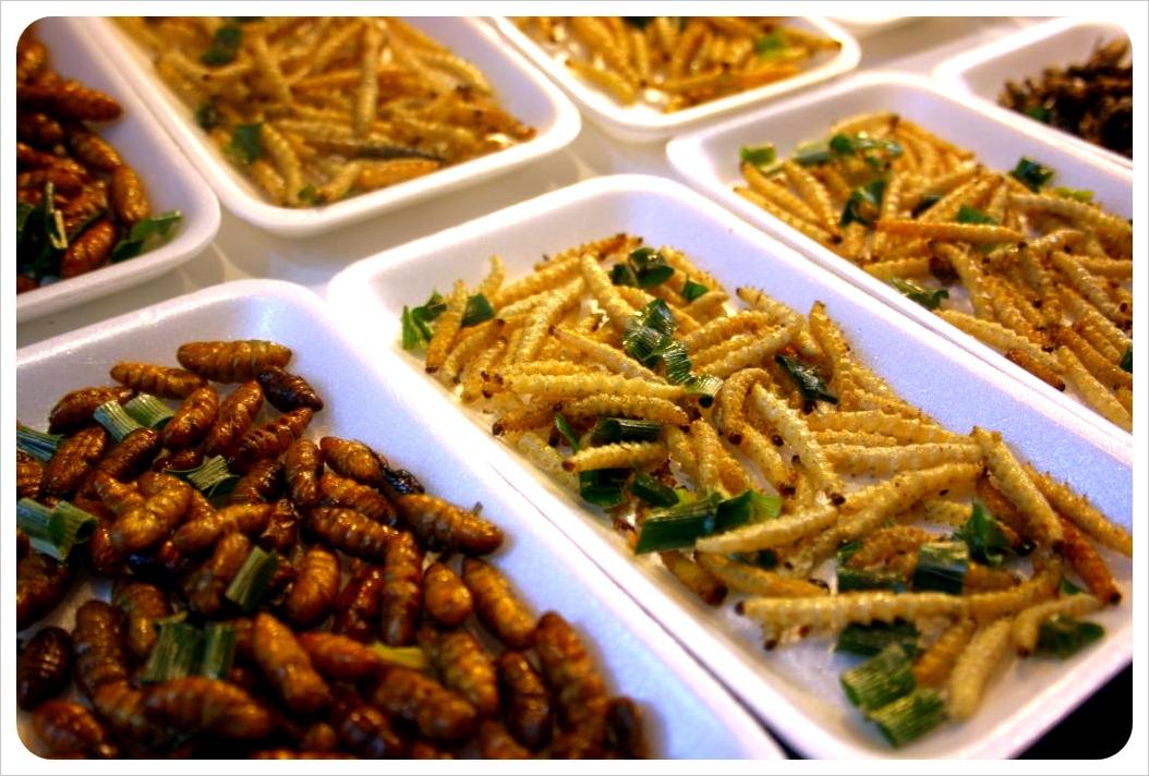 chiang rai friede silk worms