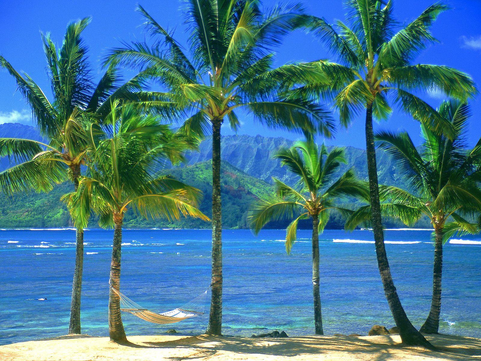 An Empty Hammock Kauai Hawaii