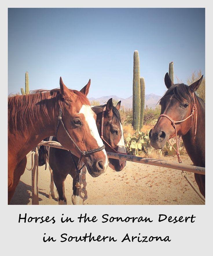 polaroid of the week usa arizona horses in the sonoran desert