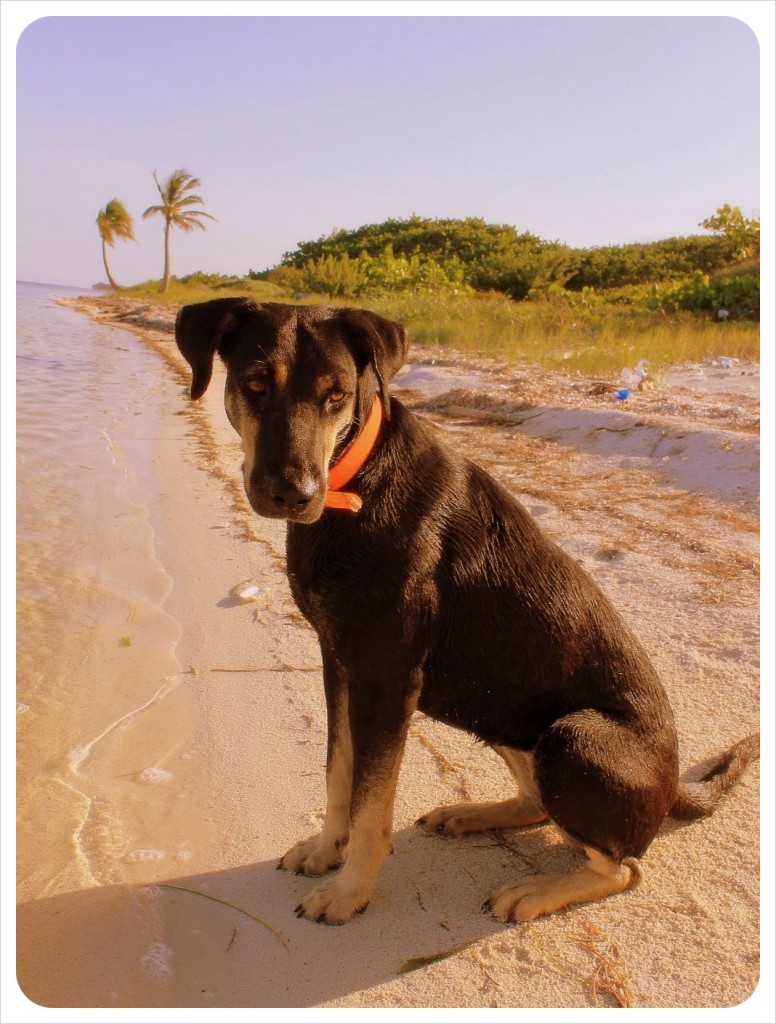 Loba on the beach in mexico