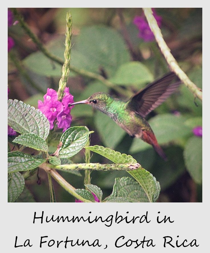 polaroid of the week costa rica 2012 hummingbird