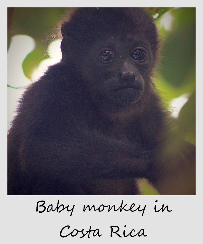 polaroid of the week costa rica 2012 monkey